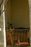 longbeach-dog.jpg