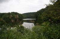 blueberry-pond.jpg