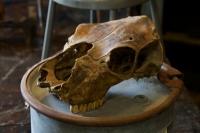 110420-Skull.jpg