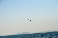 110518biwako-bird.jpg