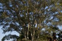 110914sakaeso-wood.jpg