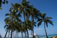 coconuts2.jpg